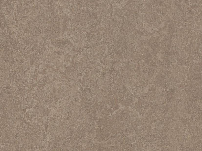 Marmoleum Marbled shrike